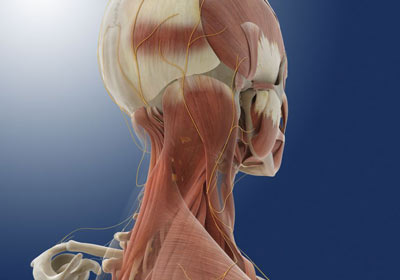 Occipital Nerve Block in NYC